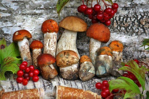 Как, где и сколько хранить свежие грибы, Храним грибы в холодильнике и морозилке