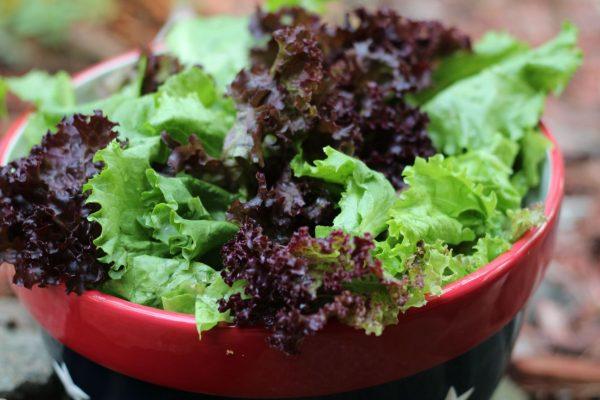 hranit listovoy salat